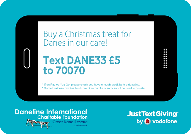 Buy a Christmsa treat for Great Danes in our care by texting DANE33 £5 to 70070